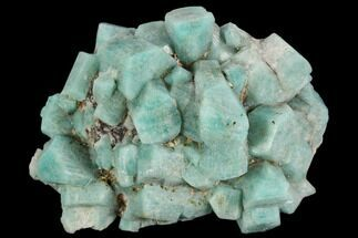 "Buy 3.6"" Amazonite Crystal Cluster - Colorado - #129238"