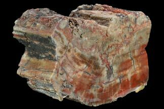 "5.3"" Wide, Polished Petrified Wood Section - Arizona For Sale, #129461"