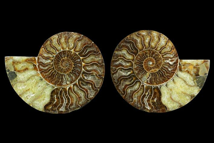 "5.4"" Agatized Ammonite Fossil (Pair) - Beautiful Preservation"