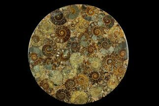 "Buy 8.2"" Composite Plate Of Agatized Ammonite Fossils - #130555"