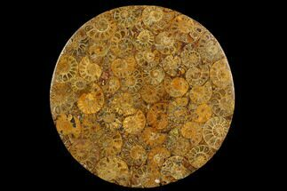 "8"" Composite Plate Of Agatized Ammonite Fossils For Sale, #130574"