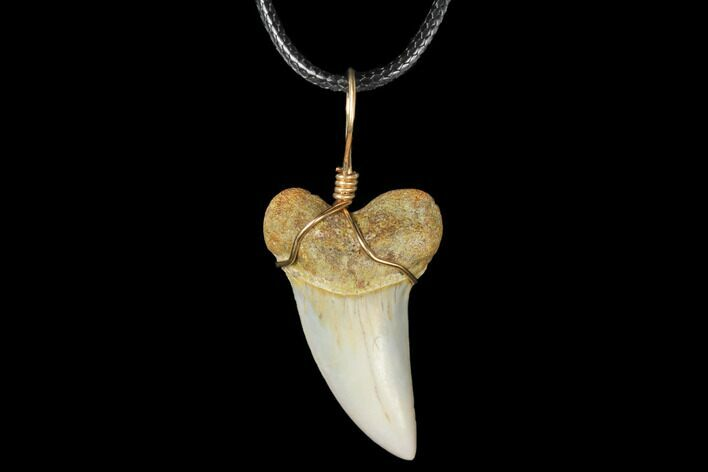 Fossil Mako Tooth Necklace - Bakersfield, California