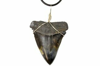 "Buy 2.15"" Fossil Mako Shark Tooth Necklace - #130912"