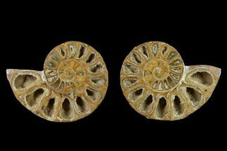 "Buy 3.1"" Cut & Polished Agatized Ammonite Fossil (Pair)- Jurassic - #131650"