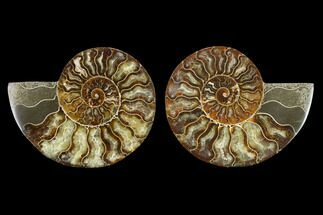 "5.4"" Agatized Ammonite Fossil (Pair) - Beautiful Preservation For Sale, #130004"