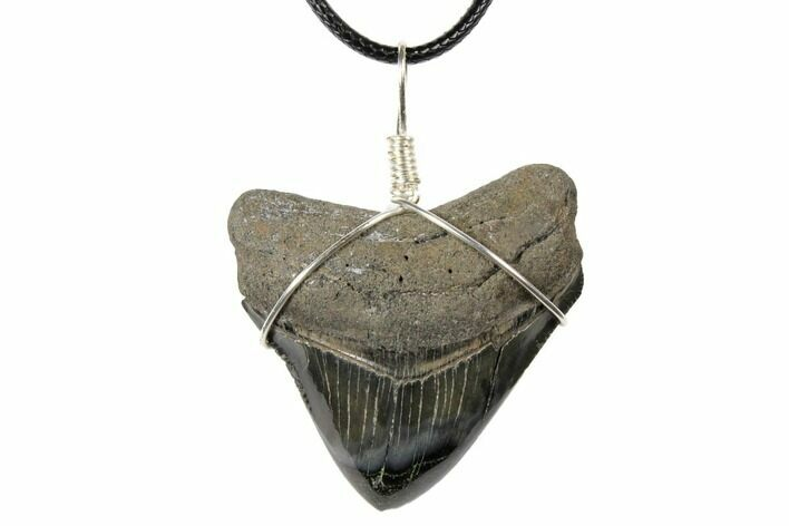"1.75"" Fossil Megalodon Tooth Necklace"