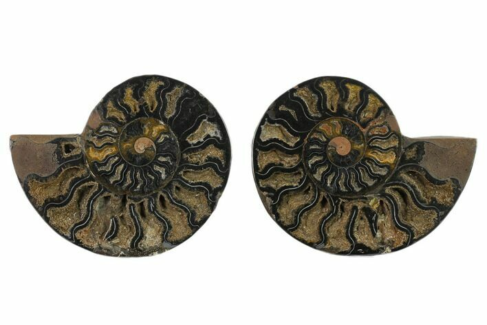 "5.8"" Split Black/Orange Ammonite Pair - Unusual Coloration"