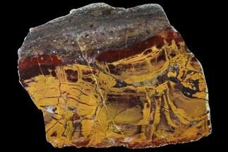 "Buy 6.1"" Polished, Chert-Replaced Domal Stromatolite Slab - Australia - #132391"