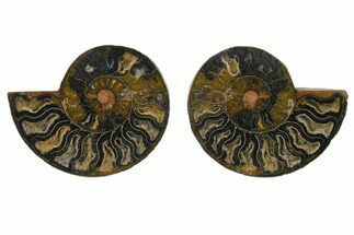 "4.15"" Cut/Polished Ammonite Fossil (Pair) - Unusual Black Color For Sale, #132554"