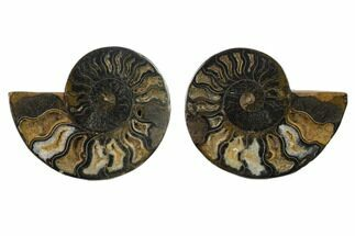 "Buy 4.25"" Cut/Polished Ammonite Fossil (Pair) - Unusual Black Color - #132556"