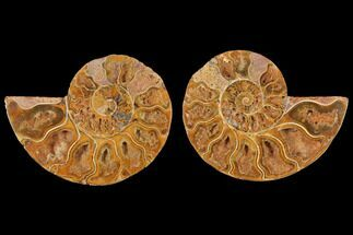 "3.3"" Cut & Polished Agatized Ammonite Fossil (Pair)- Jurassic For Sale, #131702"
