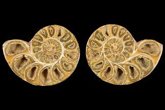 "3.6"" Cut & Polished Agatized Ammonite Fossil (Pair)- Jurassic For Sale, #131615"