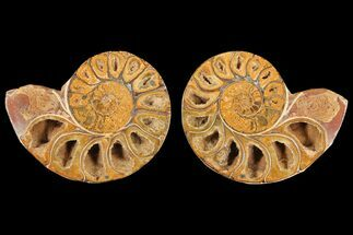 "3.5"" Cut & Polished Agatized Ammonite Fossil (Pair)- Jurassic For Sale, #131618"