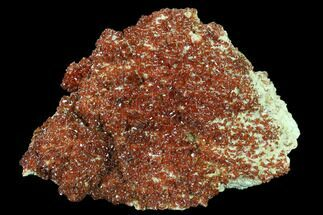 "Buy 6.1"" Ruby Red Vanadinite Crystals on Barite - Morocco - #134710"