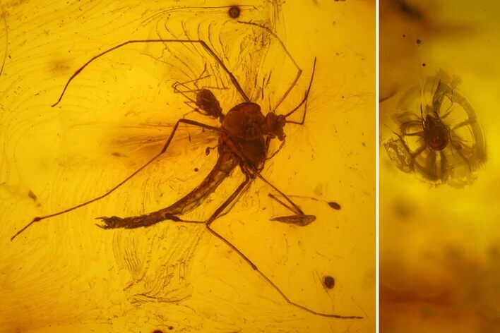 Fossil Flies (Diptera) and a Phoretic Mite (Acari) in Baltic Amber
