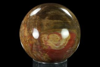 "5.2"" Colorful, Petrified Wood Sphere - Madagascar For Sale, #135323"