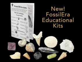 12 Piece Educational Fossil-Mineral Kit  For Sale, #136253