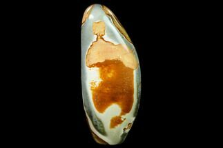 Polychrome Jasper - Fossils For Sale - #135789