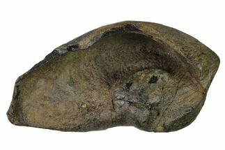 Whale (Unknown Species) - Fossils For Sale - #136902