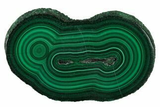 "2.18"" Polished Malachite Stalactite Slice - Congo For Sale, #137051"