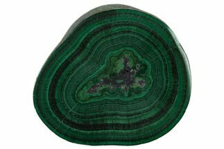 "1.12"" Polished Malachite Stalactite Slice - Congo For Sale, #137042"