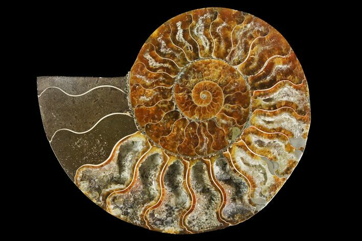 "5.25"" Agatized Ammonite Fossil (Half) - Madagascar"