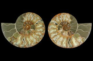 "6"" Agatized Ammonite Fossil (Pair) - Madagascar For Sale, #135260"
