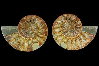 "Buy 5.2"" Agatized Ammonite Fossil (Pair) - Madagascar - #135271"