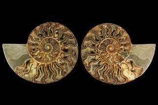 "6.6"" Agatized Ammonite Fossil (Pair) - Madagascar For Sale, #135278"