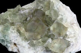 "Buy 3.9"" Sea-foam Green, Cubic Fluorite Crystal Cluster - Morocco - #138253"