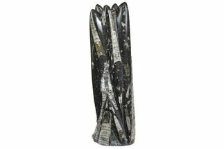 "Buy 8.5"" Tall Tower Of Polished Orthoceras (Cephalopod) Fossils - #138379"