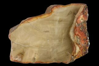 "4.1"" Petrified Wood (Araucaria) Slab - Madagascar  For Sale, #139547"