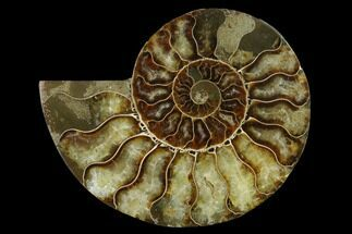 "Buy 4.55"" Agatized Ammonite Fossil (Half) - Madagascar - #139678"
