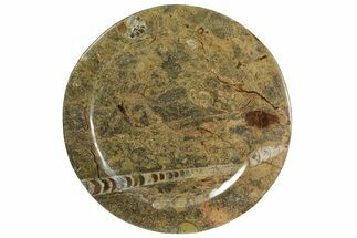 Arionoceratid Nautiloid - Fossils For Sale - #139500
