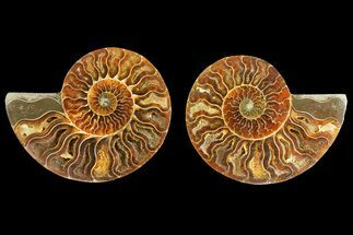 "Buy 4.15"" Agatized Ammonite Fossil (Pair) - Madagascar - #139741"