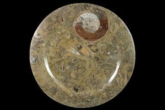 "Buy 11.4"" Fossil Orthoceras & Goniatite Round Plate - Stoneware - #140077"