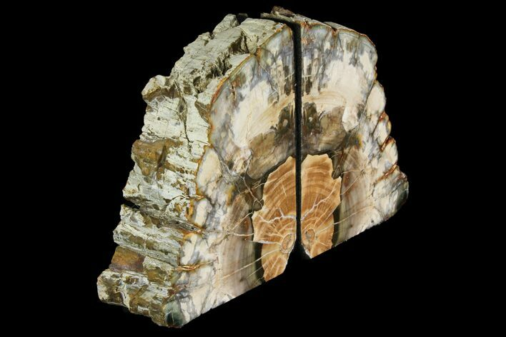 "5.3"" Tall, Colorful Petrified Wood Bookends - Madagascar"