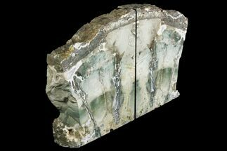 "7.4"" Green Petrified Wood Bookends - Hampton Butte, Oregon For Sale, #141087"