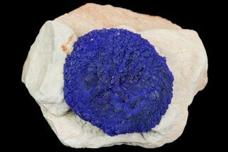 ".7"" Blue Azurite Sun on Siltstone - Australia For Sale, #142754"