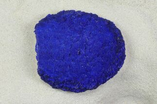 Azurite - Fossils For Sale - #142755
