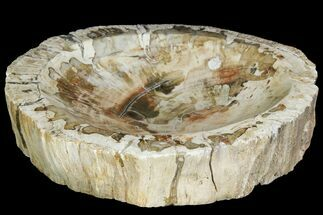 "Buy 8.3"" Beautiful Polished Petrified Wood Dish - Madagascar - #142801"