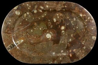 "17.7"" Fossil Orthoceras & Goniatite Oval Plate - Stoneware For Sale, #140036"