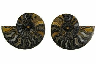 "4.15"" Cut/Polished Ammonite Fossil (Pair) - Unusual Black Color For Sale, #132698"