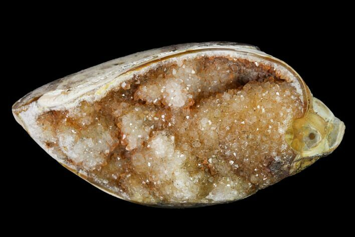 "1.79"" Chalcedony Replaced Gastropod With Druzy Quartz - India"