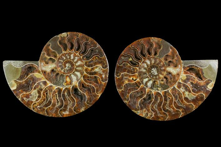 "6.05"" Agatized Ammonite Fossil (Pair) - Crystal Pockets"