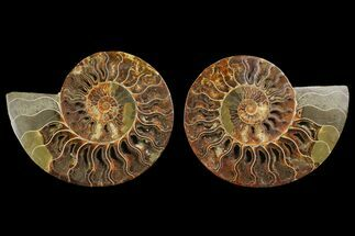 "6.55"" Agatized Ammonite Fossil (Pair) - Agatized For Sale, #144107"
