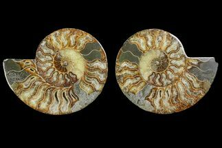 "Buy 6.45"" Agatized Ammonite Fossil (Pair) - Agatized - #144109"