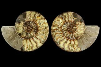 "10.5"" Agatized Ammonite Fossil (Pair) - Very Large For Sale, #145211"