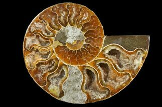 "Buy 3.3"" Cut & Polished Ammonite Fossil (Half) - Agate Replaced - #146140"