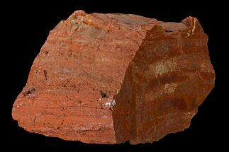 "Buy 4.5"" Brick Red, Polished Petrified Wood (Araucarioxylon) - Arizona - #147901"